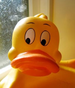 512px-Rubber_duck
