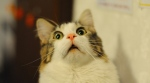 scaredy-cat-4
